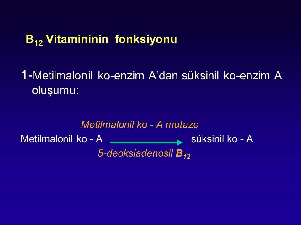 B12 Vitamininin fonksiyonu
