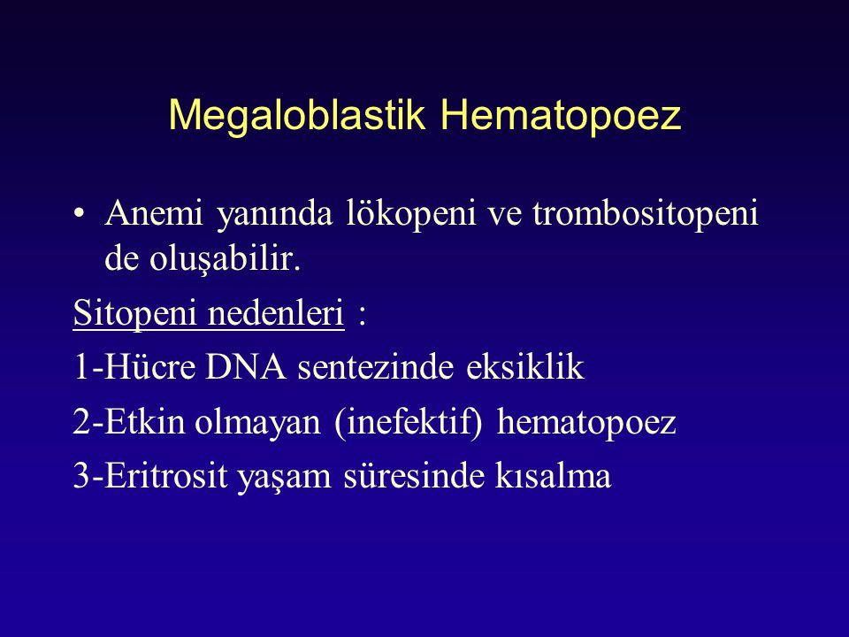 Megaloblastik Hematopoez