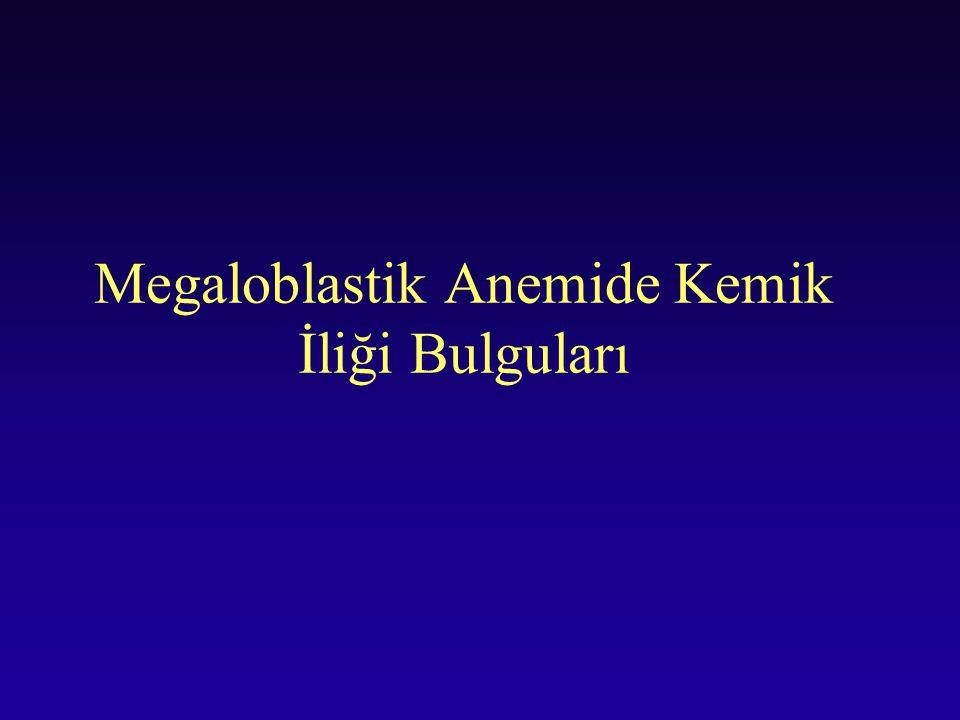 Megaloblastik Anemide Kemik İliği Bulguları