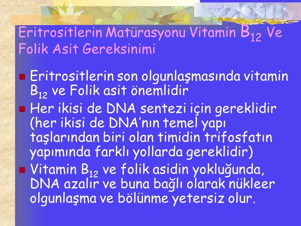 Eritrositlerin Matürasyonu Vitamin B12 Ve Folik Asit Gereksinimi