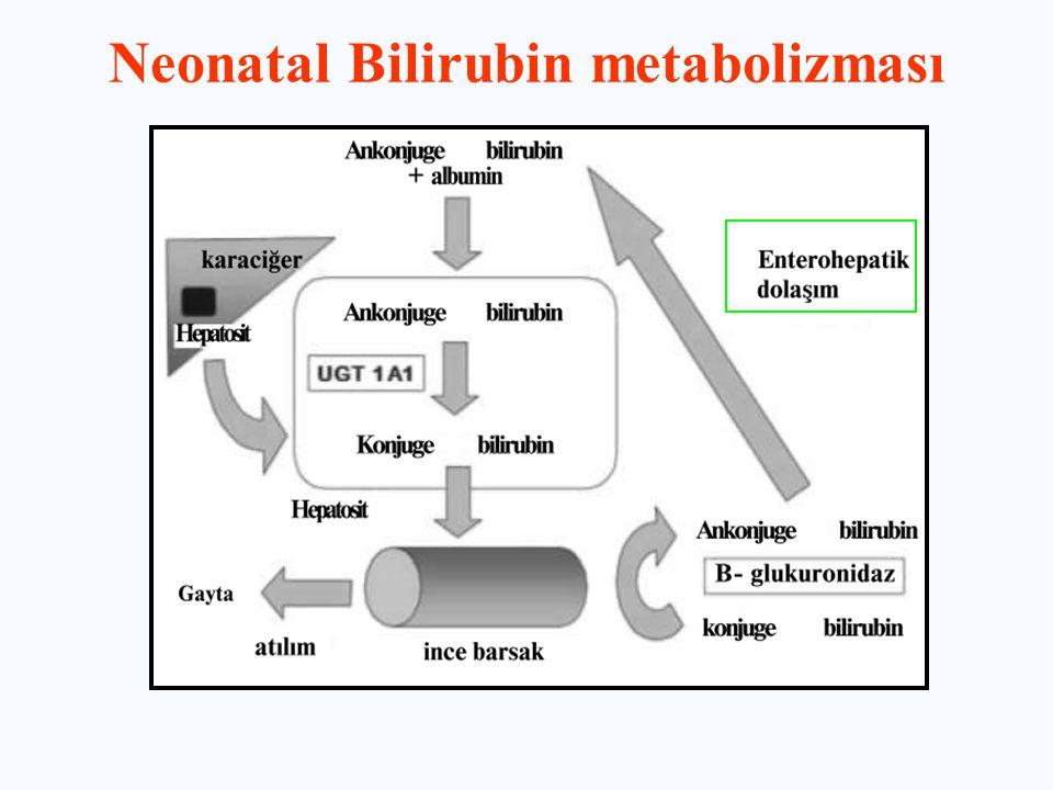 Neonatal Bilirubin metabolizması