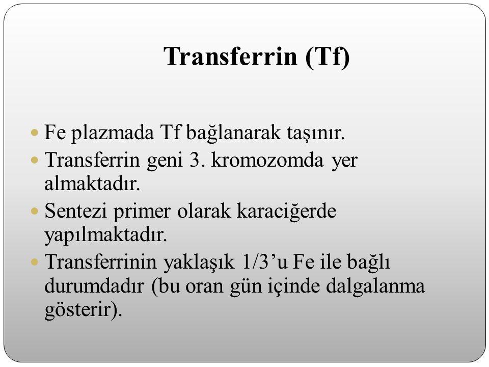 Transferrin (Tf) Fe plazmada Tf bağlanarak taşınır.