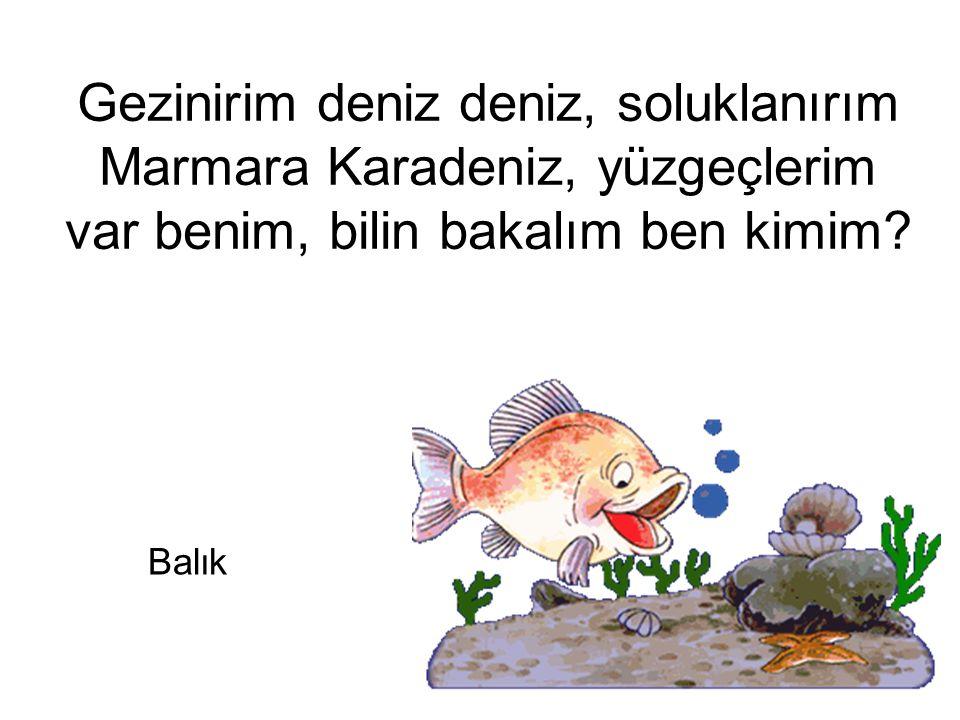 Gezinirim deniz deniz, soluklanırım Marmara Karadeniz, yüzgeçlerim var benim, bilin bakalım ben kimim