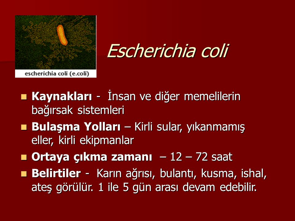 Escherichia coli Kaynakları - İnsan ve diğer memelilerin bağırsak sistemleri. Bulaşma Yolları – Kirli sular, yıkanmamış eller, kirli ekipmanlar.