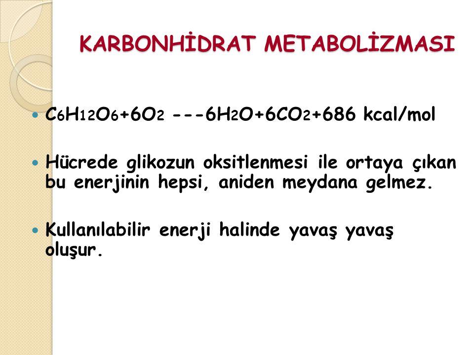KARBONHİDRAT METABOLİZMASI