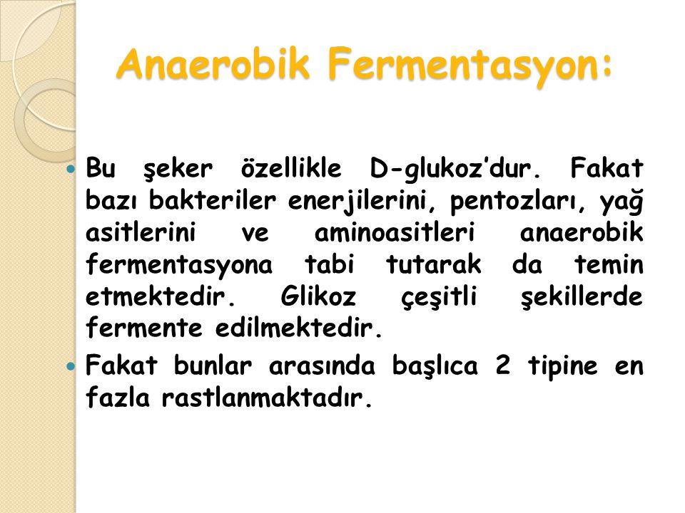 Anaerobik Fermentasyon: