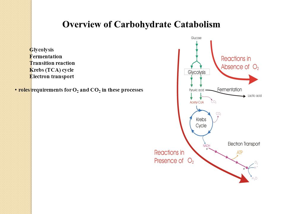 Overview of Carbohydrate Catabolism