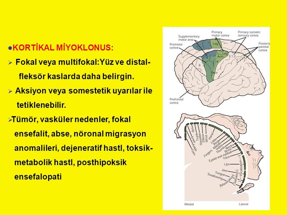 KORTİKAL MİYOKLONUS: Fokal veya multifokal:Yüz ve distal- fleksör kaslarda daha belirgin. Aksiyon veya somestetik uyarılar ile.