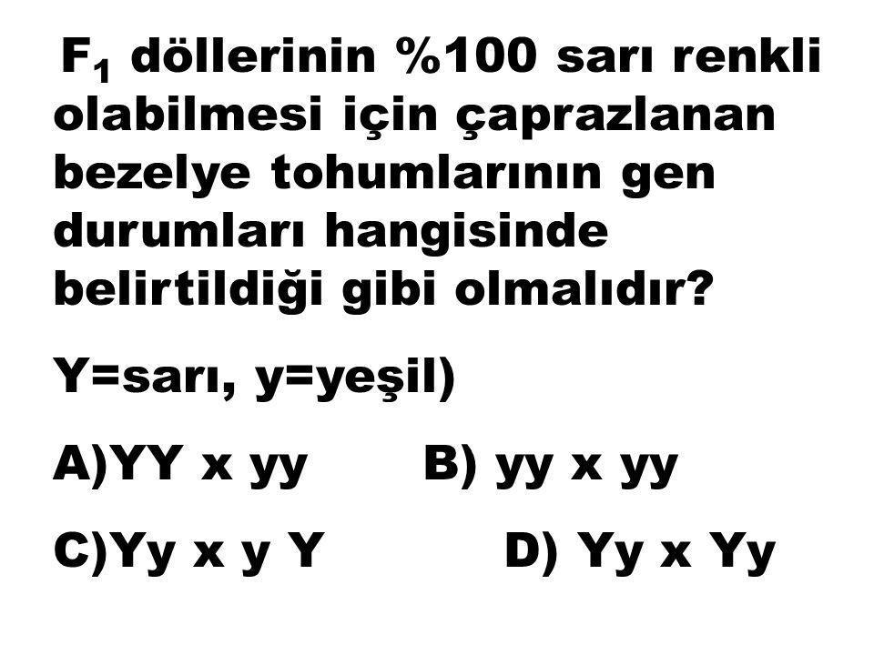 Y=sarı, y=yeşil) A)YY x yy B) yy x yy C)Yy x y Y D) Yy x Yy