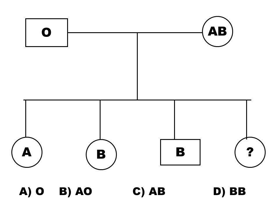 AB O A B B A) O B) AO C) AB D) BB