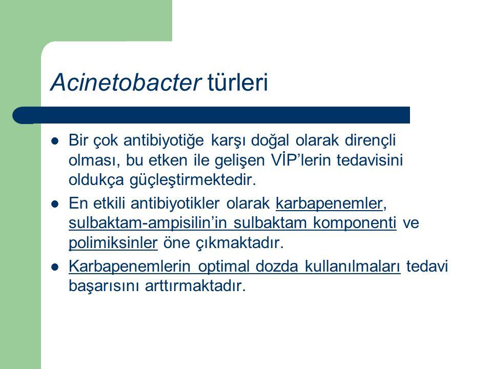 Acinetobacter türleri