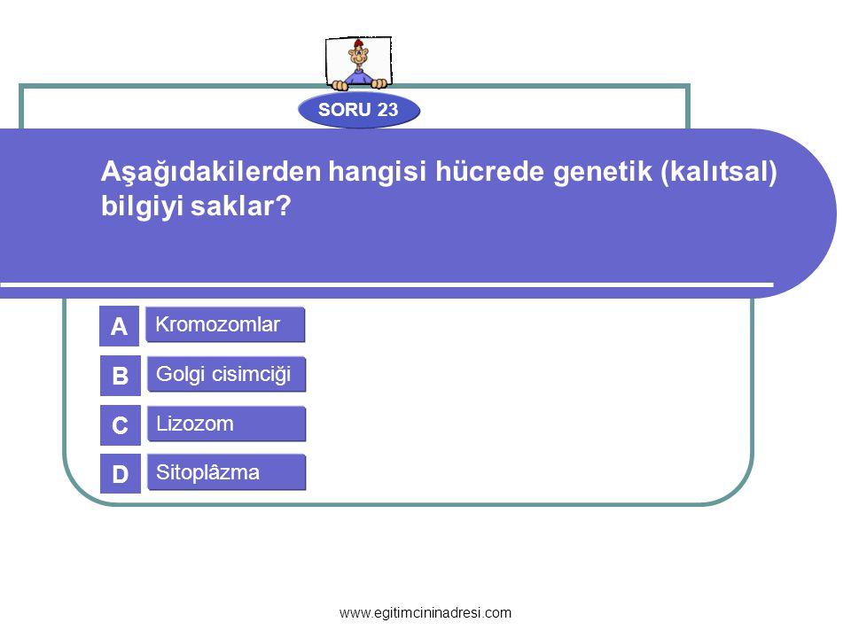 Aşağıdakilerden hangisi hücrede genetik (kalıtsal) bilgiyi saklar
