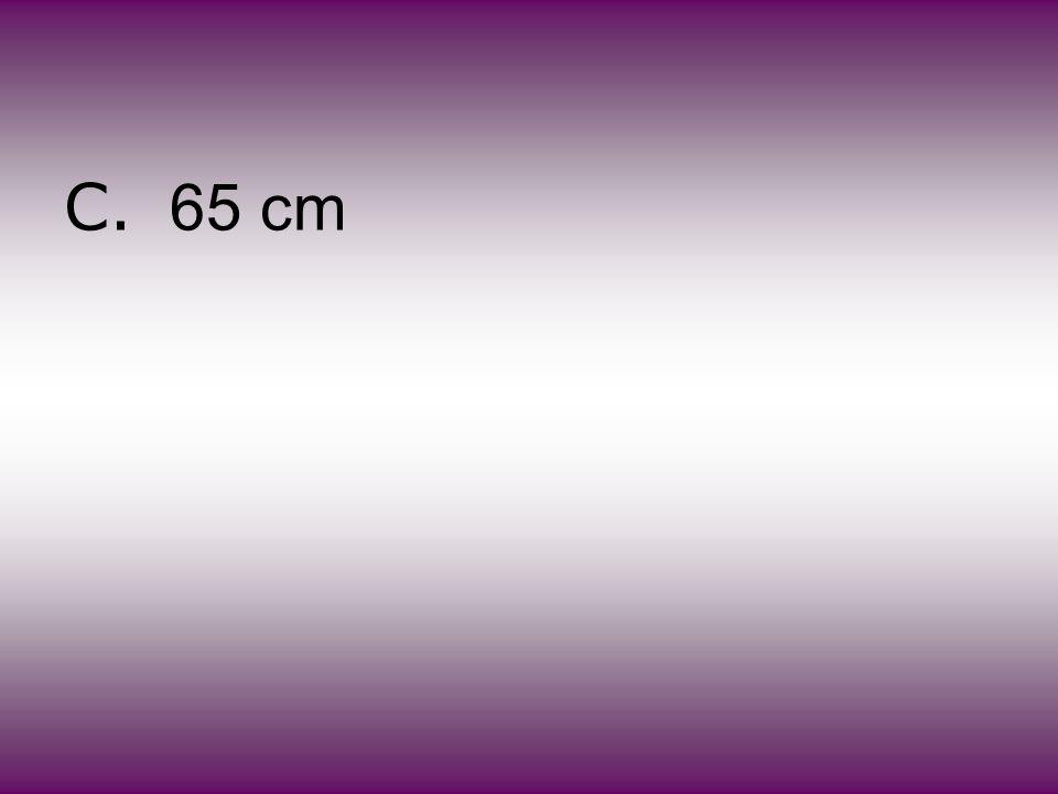 C. 65 cm