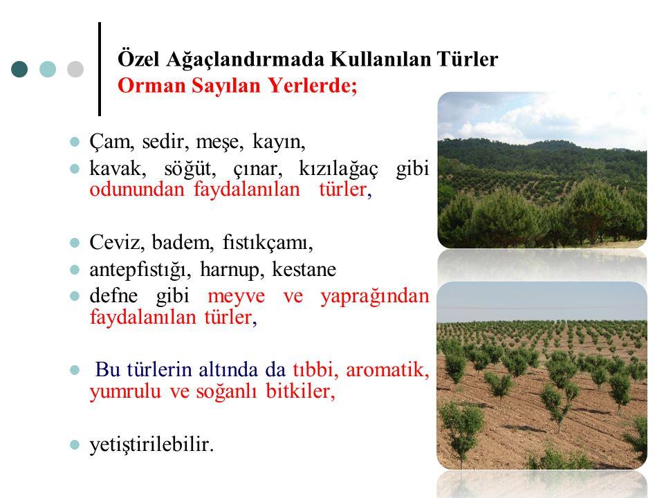 Özel Ağaçlandırmada Kullanılan Türler Orman Sayılan Yerlerde;