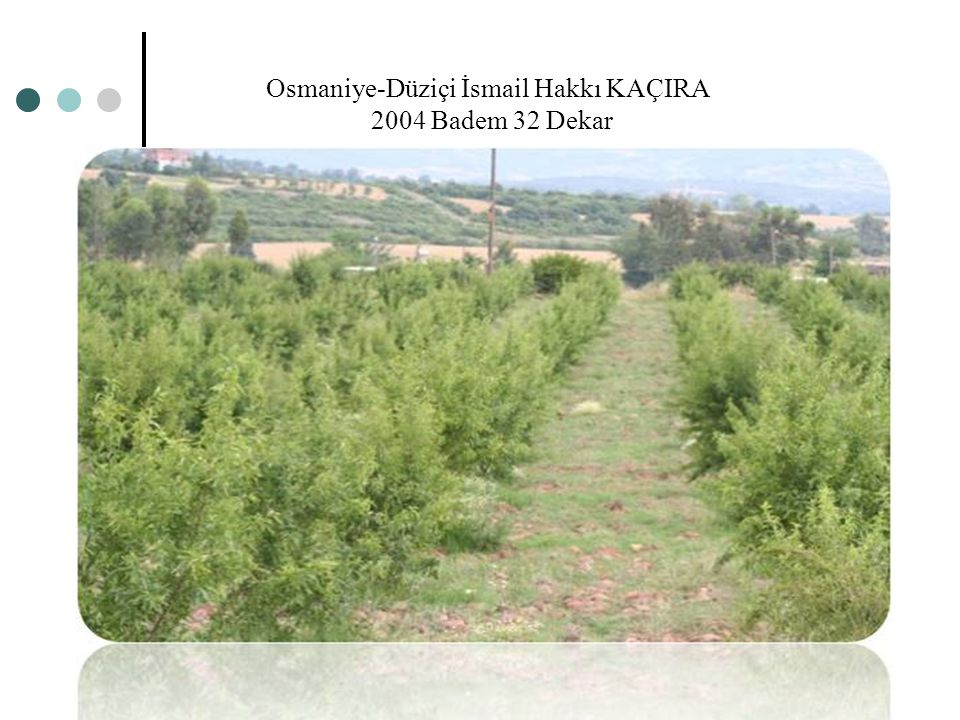 Osmaniye-Düziçi İsmail Hakkı KAÇIRA 2004 Badem 32 Dekar