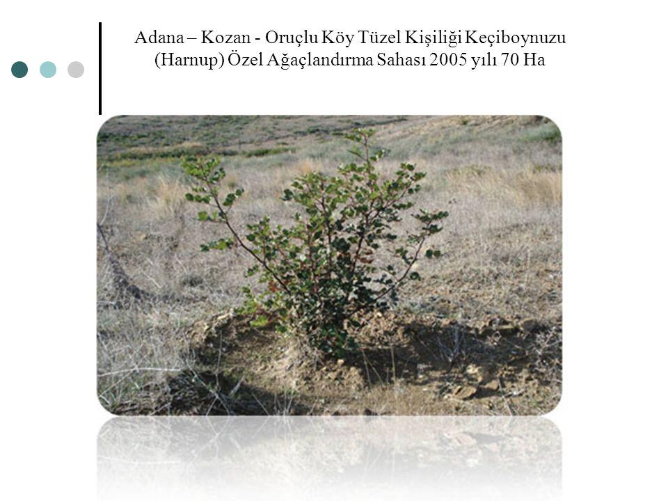 Adana – Kozan - Oruçlu Köy Tüzel Kişiliği Keçiboynuzu (Harnup) Özel Ağaçlandırma Sahası 2005 yılı 70 Ha