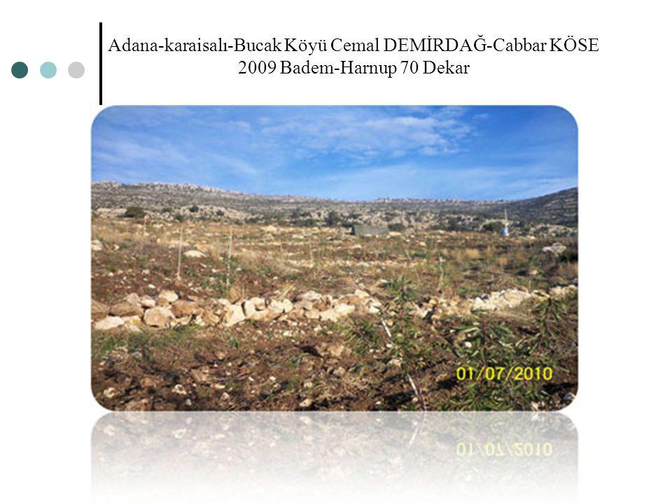Adana-karaisalı-Bucak Köyü Cemal DEMİRDAĞ-Cabbar KÖSE 2009 Badem-Harnup 70 Dekar