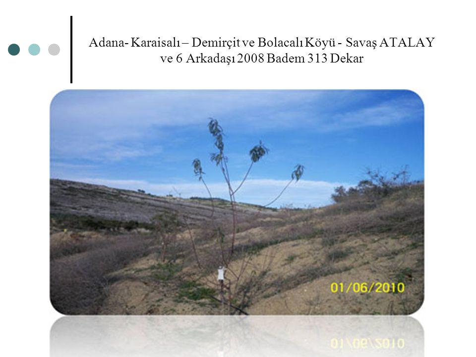 Adana- Karaisalı – Demirçit ve Bolacalı Köyü - Savaş ATALAY ve 6 Arkadaşı 2008 Badem 313 Dekar