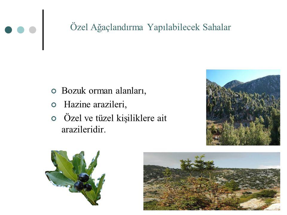 Özel Ağaçlandırma Yapılabilecek Sahalar