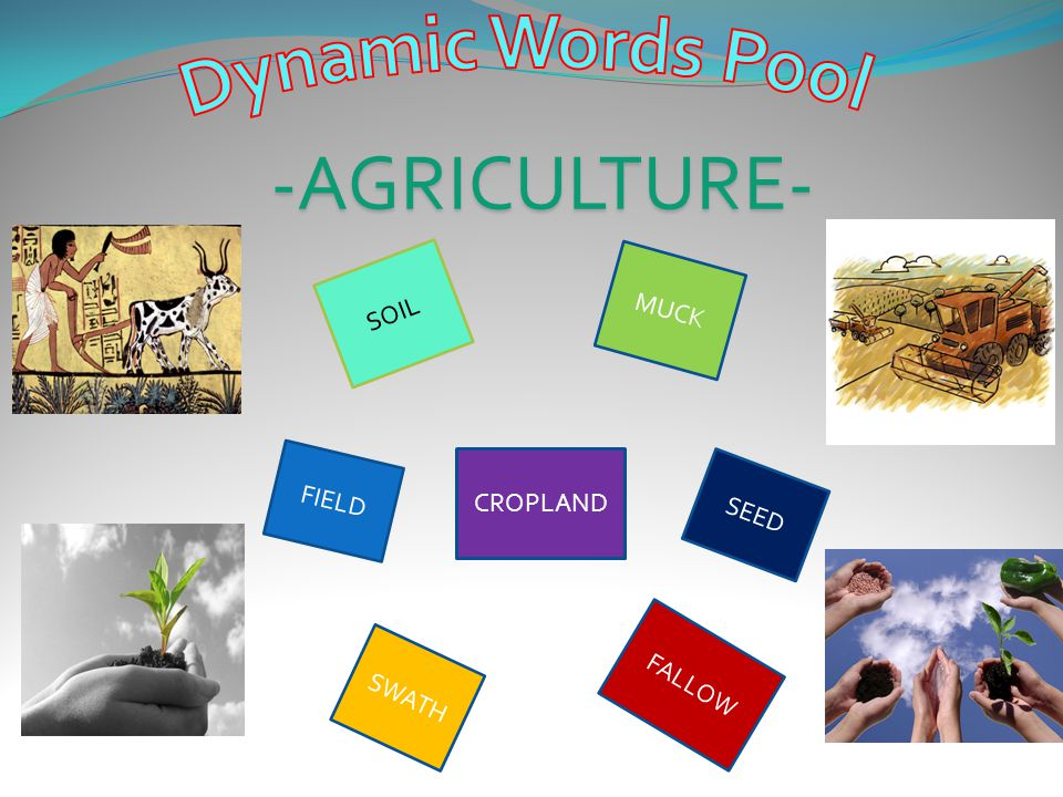 Dynamic Words Pool -AGRICULTURE- SOIL MUCK FIELD CROPLAND SEED FALLOW