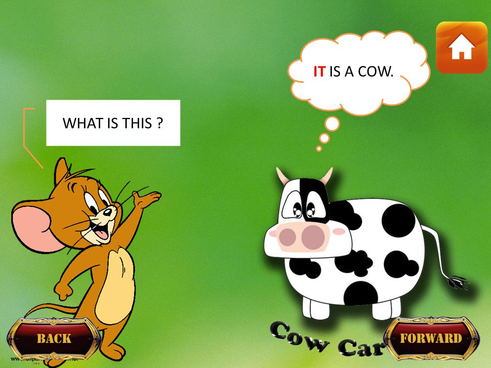 IT IS A COW. WHAT IS THIS