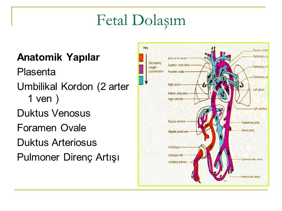 Fetal Dolaşım Anatomik Yapılar Plasenta