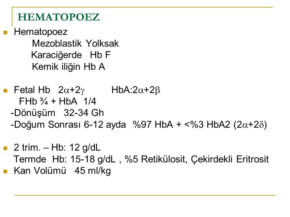 HEMATOPOEZ Hematopoez Mezoblastik Yolksak Kemik iliğin Hb A