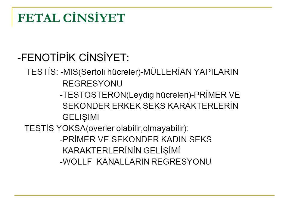 FETAL CİNSİYET -FENOTİPİK CİNSİYET: