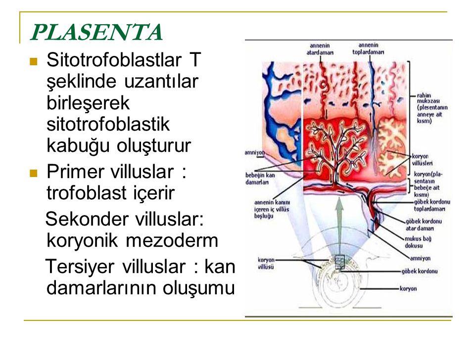 PLASENTA Sitotrofoblastlar T şeklinde uzantılar birleşerek sitotrofoblastik kabuğu oluşturur. Primer villuslar : trofoblast içerir.