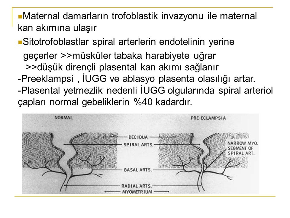Maternal damarların trofoblastik invazyonu ile maternal kan akımına ulaşır