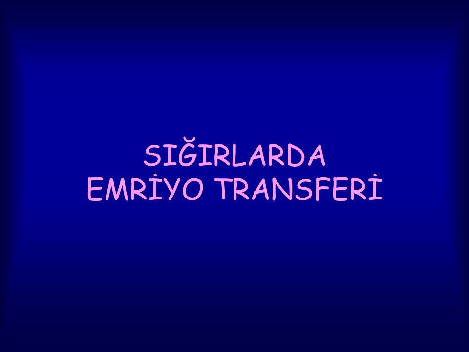 SIĞIRLARDA EMRİYO TRANSFERİ