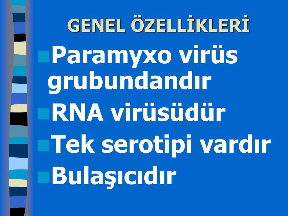 Paramyxo virüs grubundandır RNA virüsüdür Tek serotipi vardır