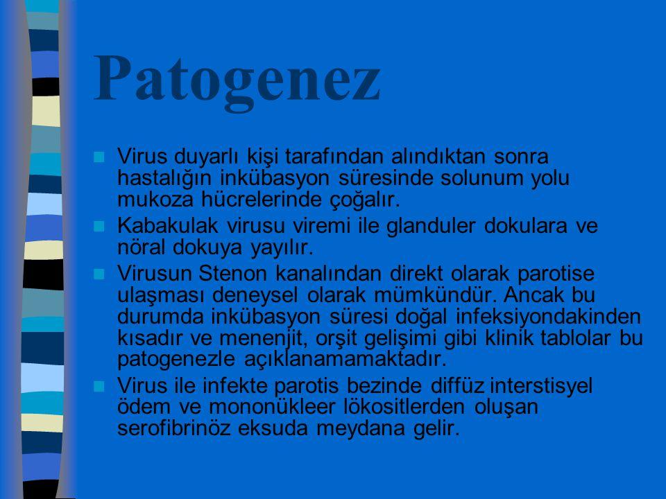 Patogenez Virus duyarlı kişi tarafından alındıktan sonra hastalığın inkübasyon süresinde solunum yolu mukoza hücrelerinde çoğalır.