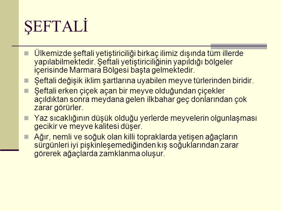 ŞEFTALİ