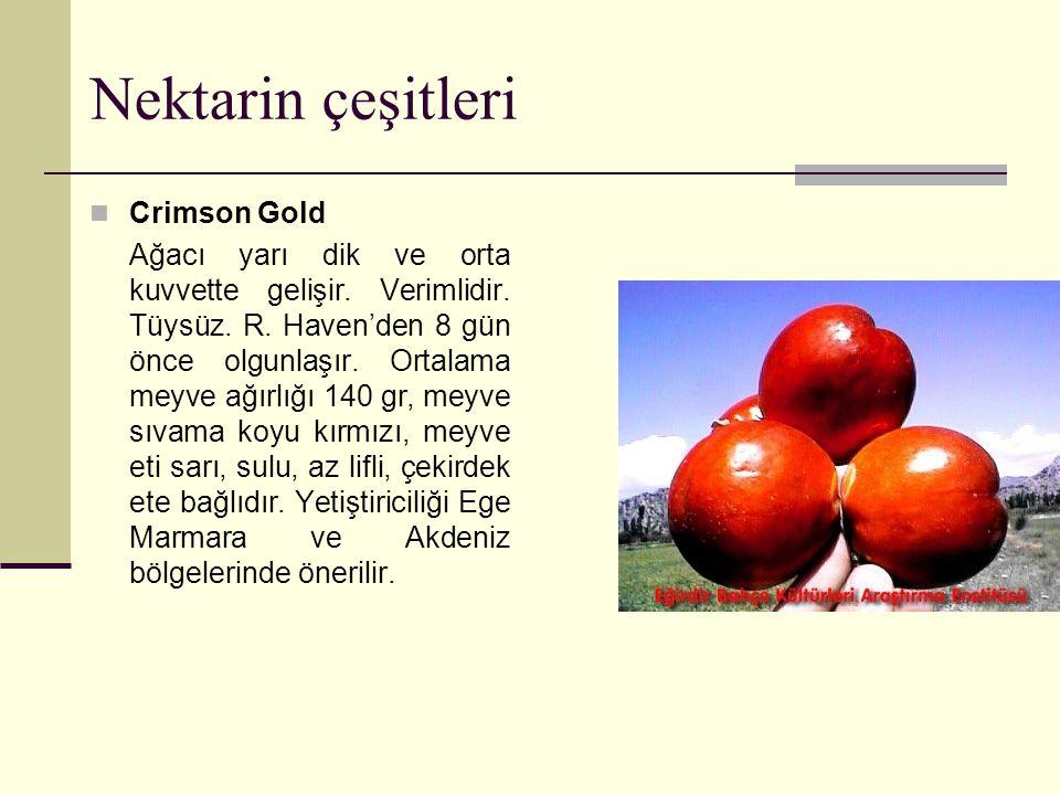 Nektarin çeşitleri Crimson Gold