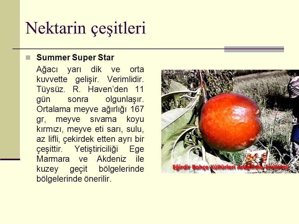 Nektarin çeşitleri Summer Super Star