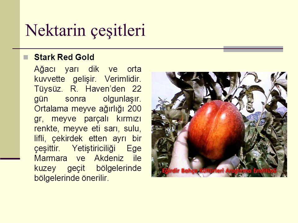 Nektarin çeşitleri Stark Red Gold