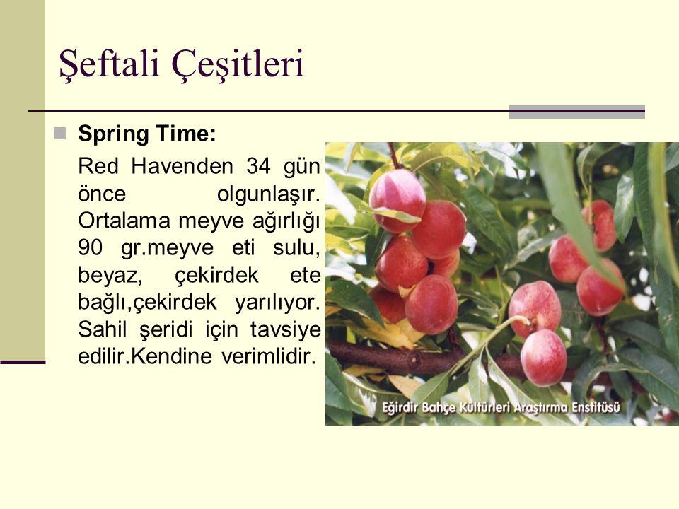 Şeftali Çeşitleri Spring Time: