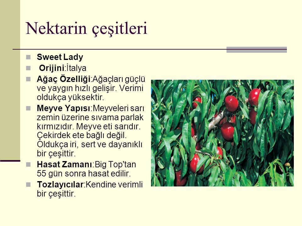 Nektarin çeşitleri Sweet Lady Orijini:İtalya