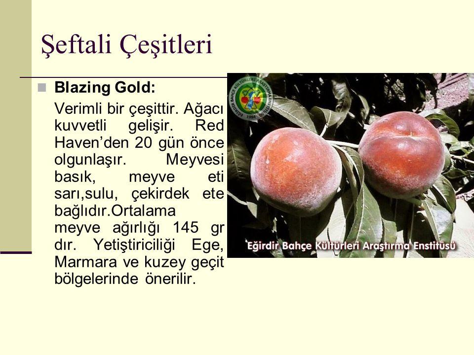 Şeftali Çeşitleri Blazing Gold: