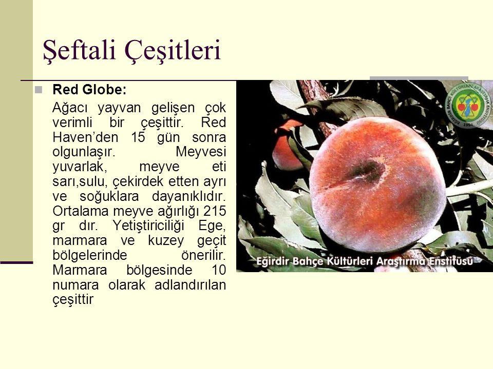 Şeftali Çeşitleri Red Globe: