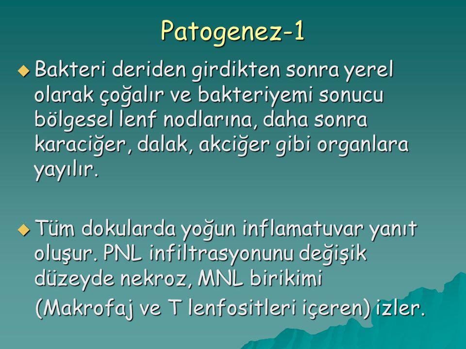 Patogenez-1
