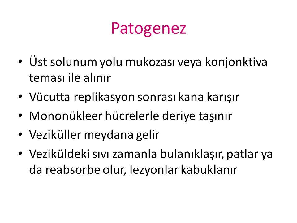 Patogenez Üst solunum yolu mukozası veya konjonktiva teması ile alınır