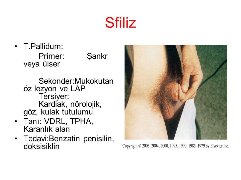 Sfiliz T.Pallidum: Primer: Şankr veya ülser