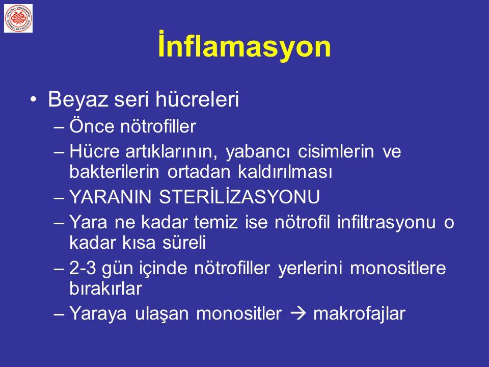 İnflamasyon Beyaz seri hücreleri Önce nötrofiller