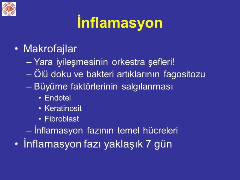 İnflamasyon Makrofajlar İnflamasyon fazı yaklaşık 7 gün
