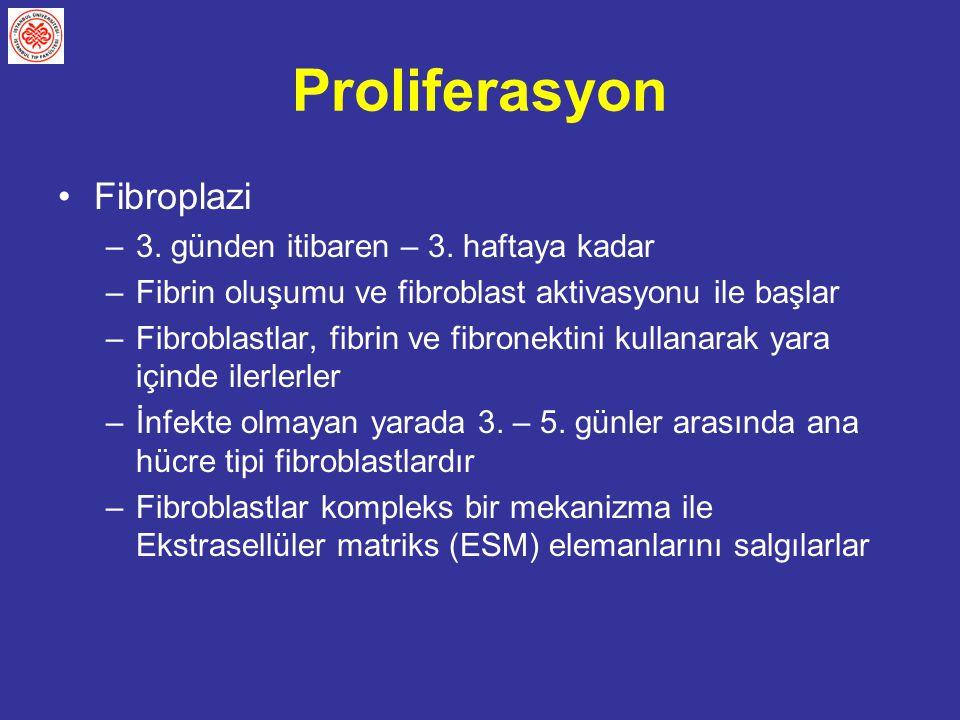 Proliferasyon Fibroplazi 3. günden itibaren – 3. haftaya kadar