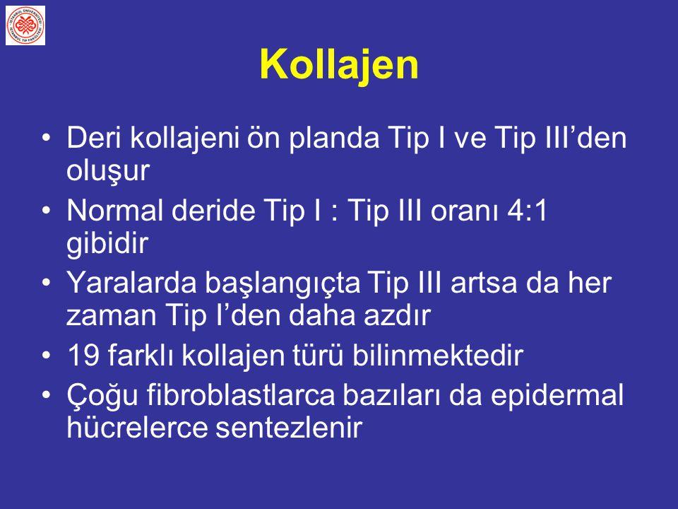 Kollajen Deri kollajeni ön planda Tip I ve Tip III'den oluşur