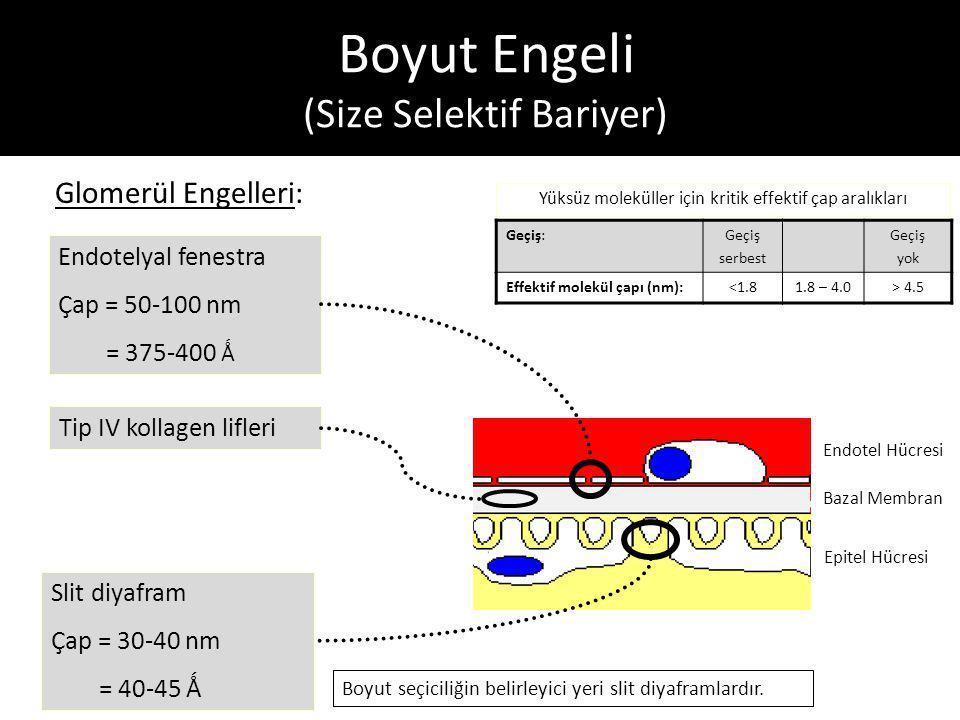 Boyut Engeli (Size Selektif Bariyer)