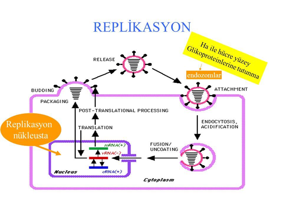 Glikoproteinlerine tutunma